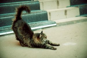 Cat stretches by Anna-Belash