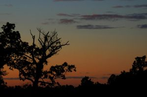 Plantation Sunset by LDFranklin
