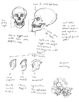 Saiyan anatomy - skull by DarkFalcon-Z