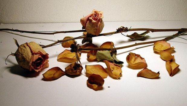 Dried Roses 1 by Mictecacihuatl-Stock