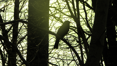 Bird Silhouette by RockLou