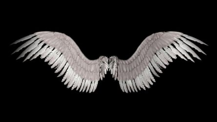 New Angel Wings by shadavar-stock