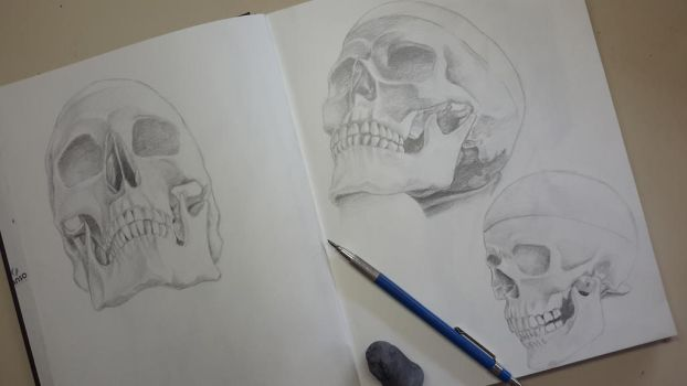 Skulls - Graphite pencil drawing by CarolMylius