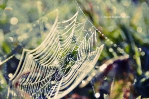 spider's web by Holunder