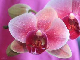 Pretty in pink by Melusine8