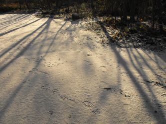 Snow shadow by Mystic-Photography