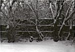 The First Snow of 2003 by plutoniancrow