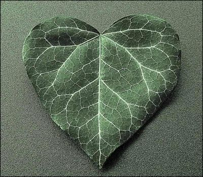 Love leaf :2006 edition: by Tangens-HR