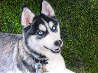 Husky in color pencils by CierraFrye