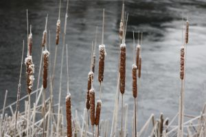 frosty water lilys 2010 by loobyloukitty