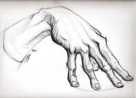 The Anatomy of a Hand by Tarana