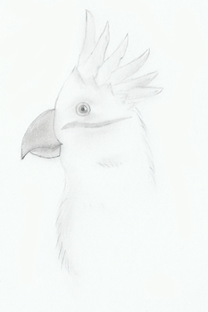just a Cockatoo - scrap by fcomX