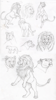Understanding Lions -Study Batch 2 by The-Hare