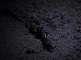 Ghost Crab 1 by usedbooks
