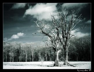 Cold blue by mescaline73