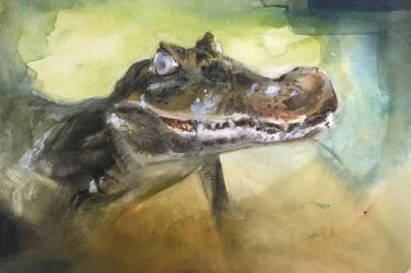 This caiman: meh by hrutger