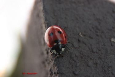 Ladybird two by LexartPhotos