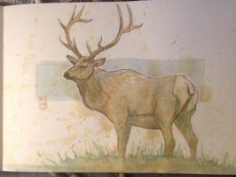Daily Watercolor animal Sketch: Deer by RM-WINCH