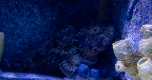 Stonefish by AaronMk