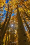 Natures Gold by tassanee