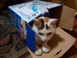 Cat in a box 2 by Lord-LestatDlaCuadra