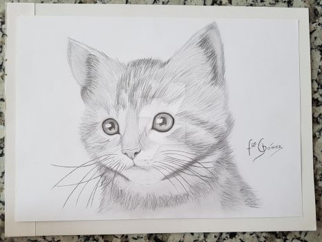 Drawing a cat (Kitten) by Francisco-G9