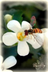 Beefly by stuartist