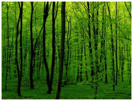 Green Is Green by JeanFrancois