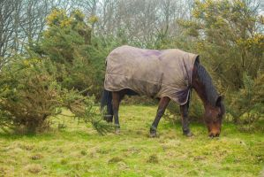 Horse - Hainault Forest - 2013. by LouHartphotography