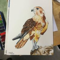 Falcon by namsikka