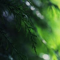 Greenery by AljoschaThielen