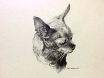 Penny, the Chihuahua by J-E-M