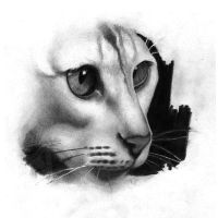 Cat drawing by ProfessorPicasso