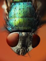 Green Fly by Vautch