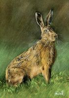 The Hare by SRussellart