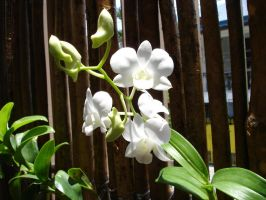 Orchids Stock ii by littlechina