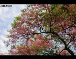 Pink tree by Jellyfish-Girl
