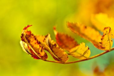 1257 - Fall in Motion by boxx2genetica
