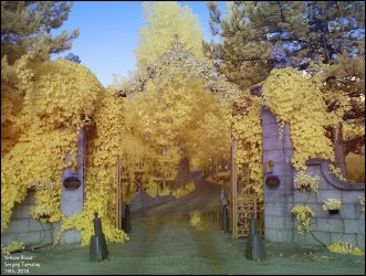 Yellow Gates by zoomzoom