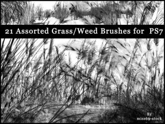 Grass and reed Brushes by miss69-stock