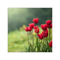 Tulips 2 by manroms