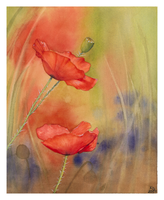 Poppies by steel--blue