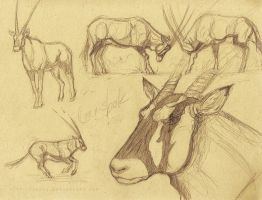 Gemsbok Sketches by akeli