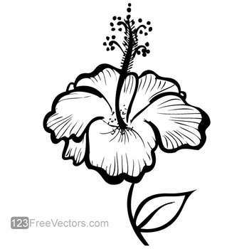 Hand Drawn Hibiscus Flower Vector by 123freevectors