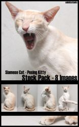 Siamese cat series by NickiStock