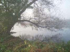 Nature 011 foggy by Dreamcatcher-stock