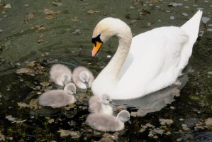 The Caring Mother by Earth-Hart