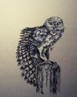 Daily sketch 10 - The Little Owl by Crateris