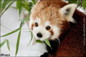 No,I do not think I want to share my bamboo,thanks by woxys