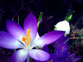 Photogallery 2014 - 07 purple flower by Ingnition